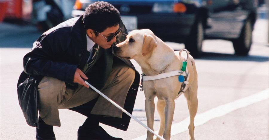 Vietnam Airlines chấp nhận vận chuyển hành khách là người khiếm thị có chó dẫn đường