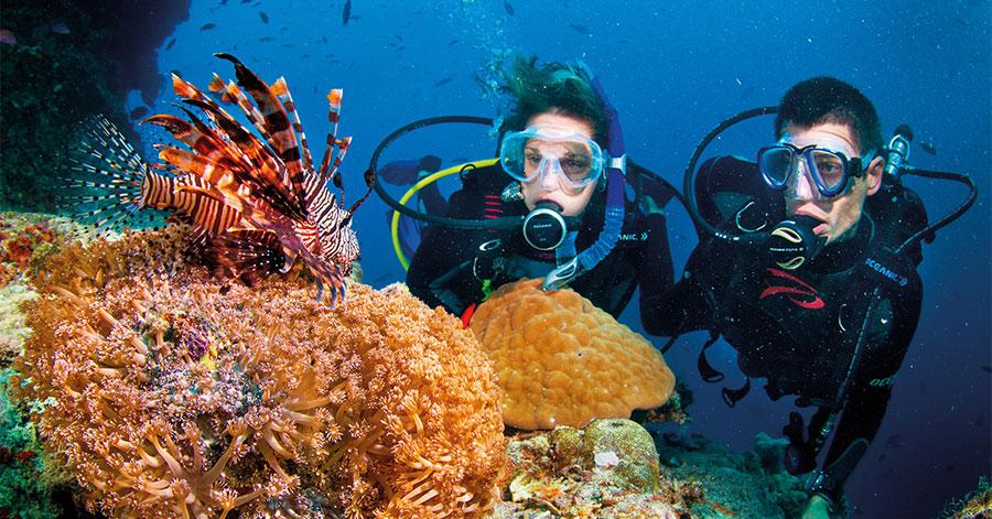 Lặn biển ngắm san hô - hoạt động không thể bỏ qua khi du lịch Phú Quốc