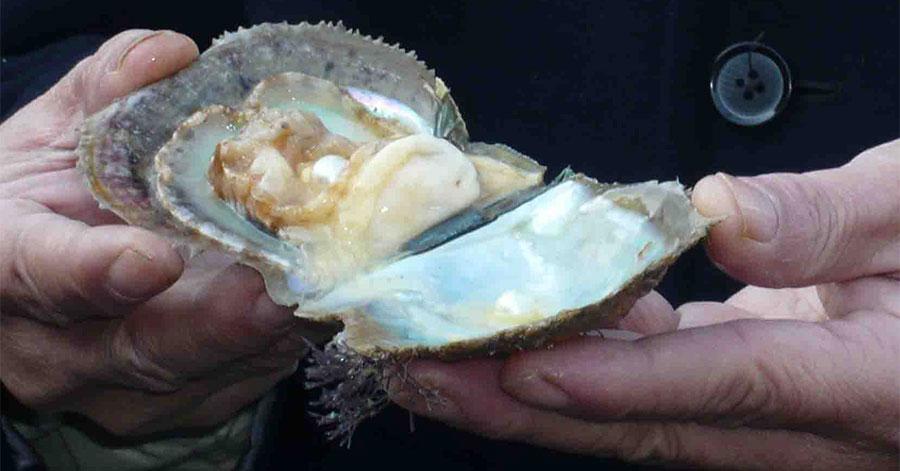 Môi trường biển Phú Quốc là điều kiện thuận lợi cho hoạt động nuôi trai lấy ngọc