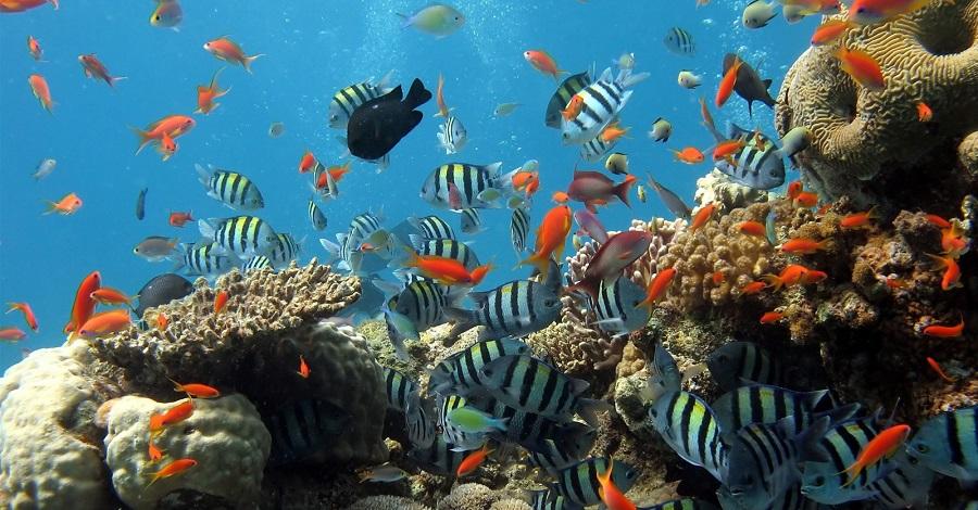 Làm sao có thể bỏ qua cơ hội chiêm ngưỡng vẻ đẹp dưới đáy biển chứ
