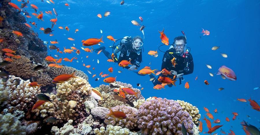Furama là một trong những địa chỉ ngắm san hô vô cùng đẹp