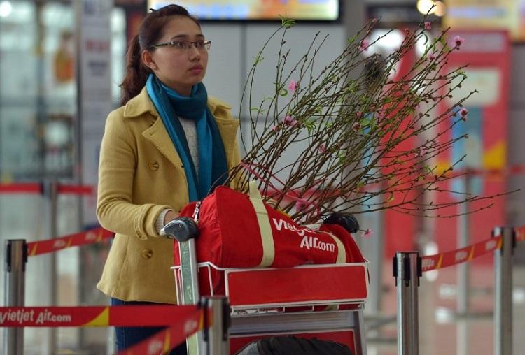 Những quy định về vận chuyển mai, đào dịp Tết 2017 của Vietnam Airlines và VietJet Air